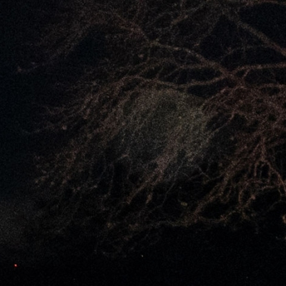 Enlarged Orb in tree